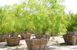 Beautiful Drought Tolerant Trees